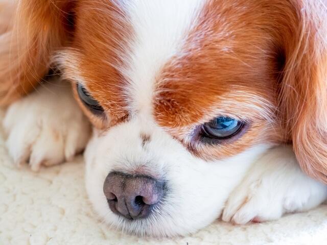 子犬がごはんを食べてくれない!正しいフードのあげ方は?